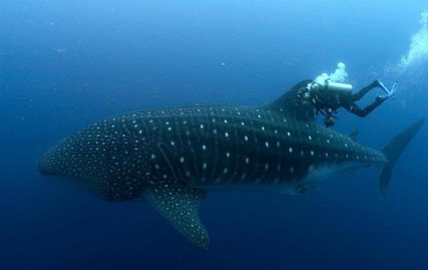 Köpek balığı fotoğrafları nasıl çekilir? 1