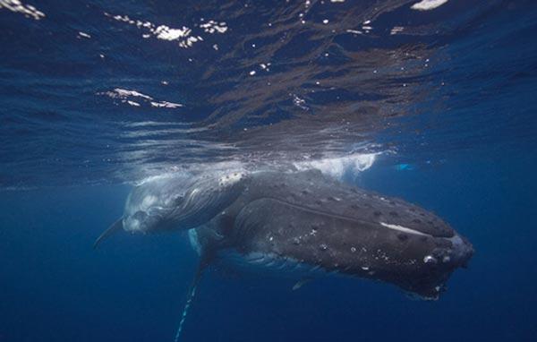 Köpek balığı fotoğrafları nasıl çekilir? 11