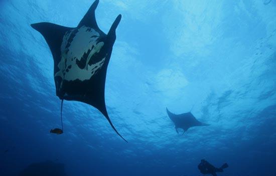 Köpek balığı fotoğrafları nasıl çekilir? 13