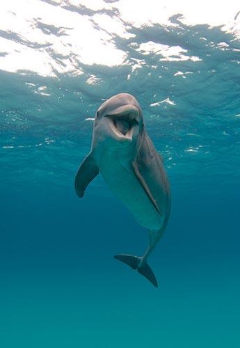 Köpek balığı fotoğrafları nasıl çekilir? 14
