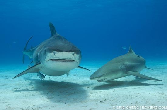 Köpek balığı fotoğrafları nasıl çekilir? 15
