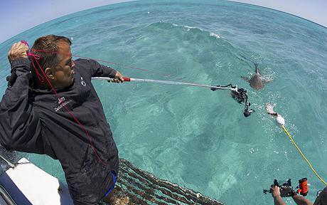 Köpek balığı fotoğrafları nasıl çekilir? 16