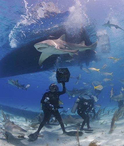 Köpek balığı fotoğrafları nasıl çekilir? 17