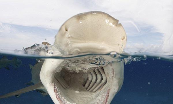Köpek balığı fotoğrafları nasıl çekilir? 23