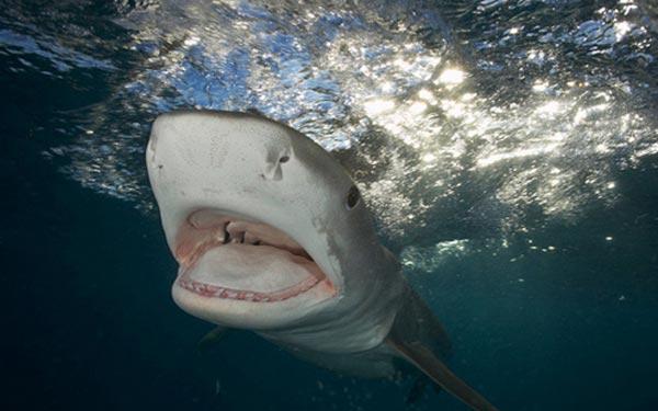 Köpek balığı fotoğrafları nasıl çekilir? 6