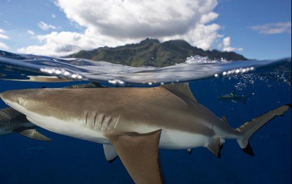 Köpek balığı fotoğrafları nasıl çekilir? 8