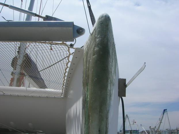 Mersin'de tekneler karaya çekilir mi? 8
