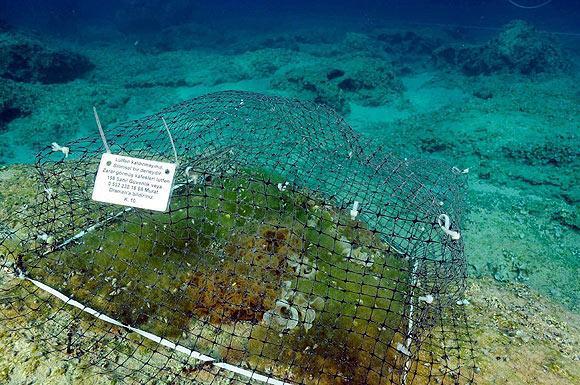 Akdeniz ve Ege'nin dibi bozkır gibi 4