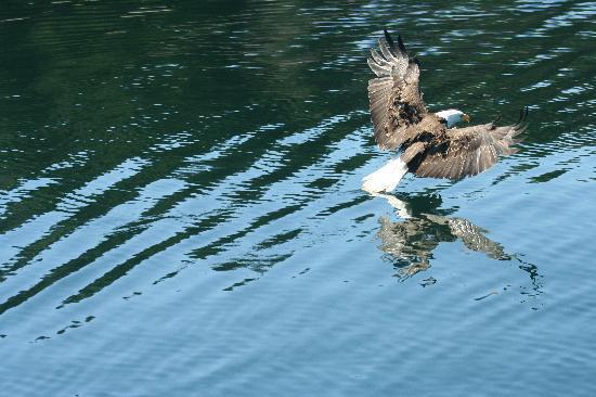 Kartalların balık kavgası 1