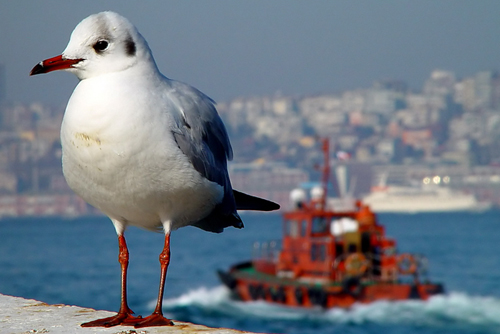 Bir sevdadır İstanbul 4