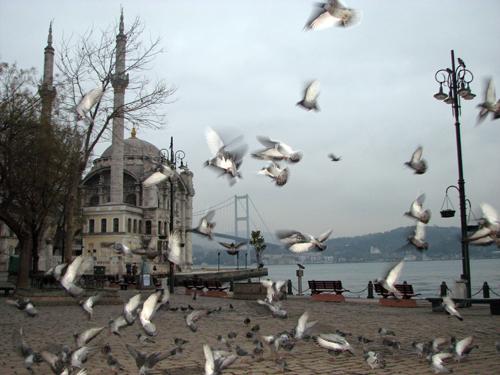 Bir sevdadır İstanbul 5