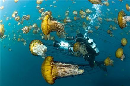 Sualtı filmi 'Oceans'tan müthiş görüntüler... 1
