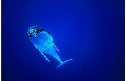 Sualtı filmi 'Oceans'tan müthiş görüntüler... 13