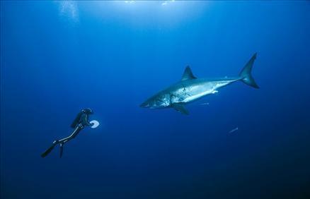 Sualtı filmi 'Oceans'tan müthiş görüntüler... 15