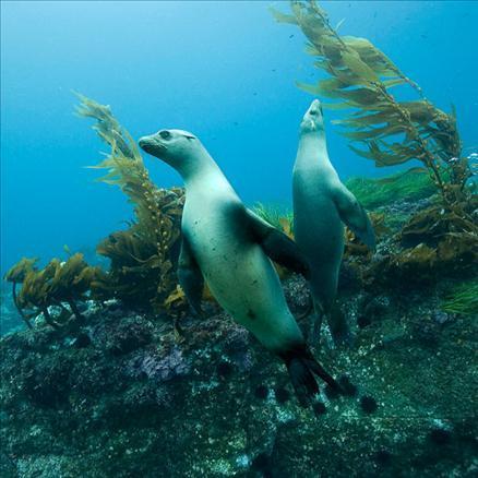 Sualtı filmi 'Oceans'tan müthiş görüntüler... 16
