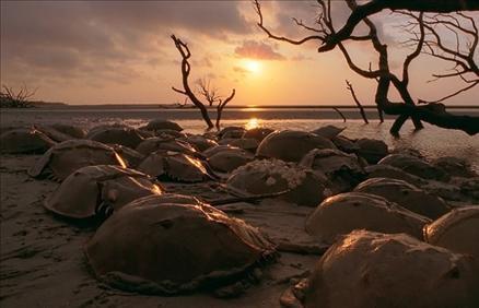 Sualtı filmi 'Oceans'tan müthiş görüntüler... 5