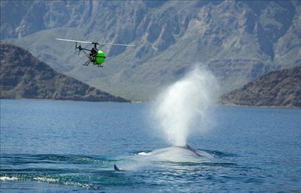 Sualtı filmi 'Oceans'tan müthiş görüntüler... 6