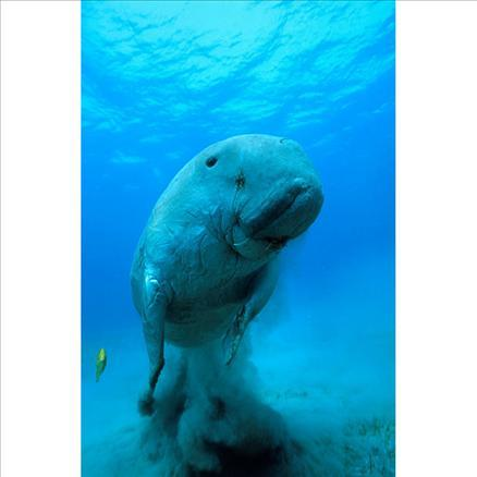 Sualtı filmi 'Oceans'tan müthiş görüntüler... 7