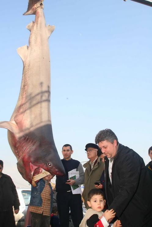 Marmara'nın keskin dişi Saros'da ağlara takıldı 1