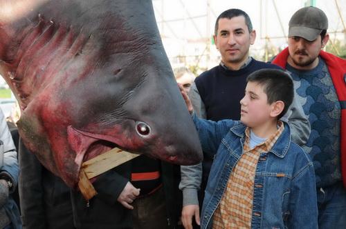 Marmara'nın keskin dişi Saros'da ağlara takıldı 3
