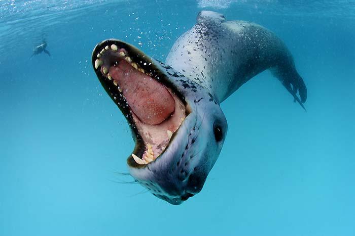 Fok balıkları 1