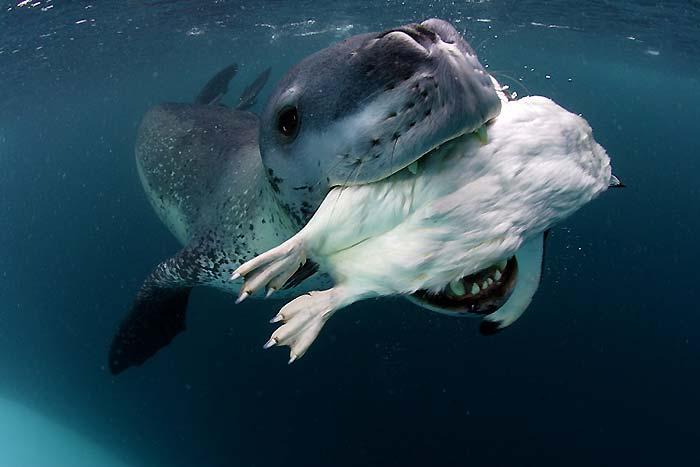 Fok balıkları 10