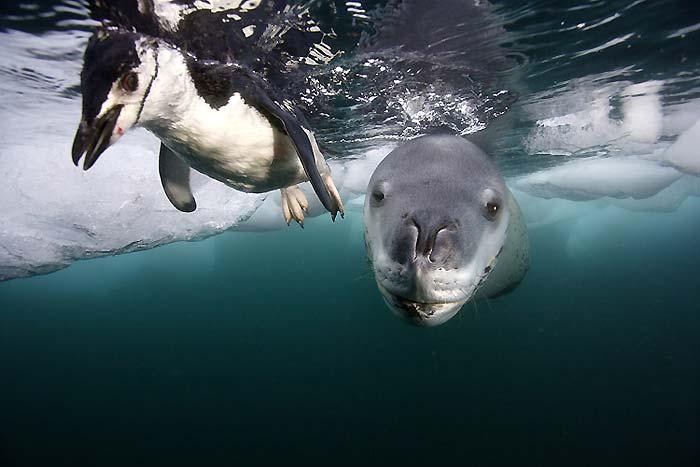 Fok balıkları 4