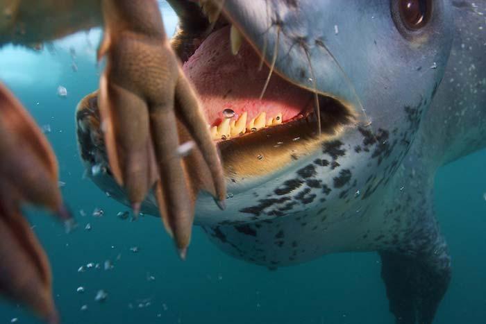 Fok balıkları 6