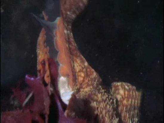 Ahtapot, köpekbalığına karşı 9