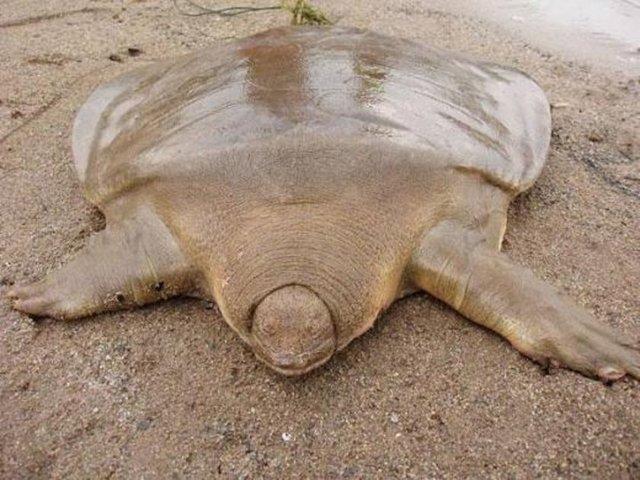 Hiç bilinmeyen deniz canlıları 16