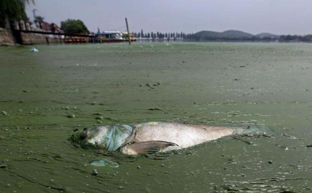 Endüstriyel kirlilik dünya sularını tehdit ediyor 9