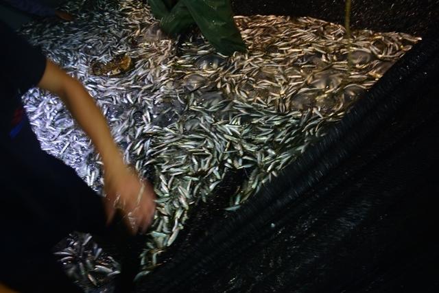 """Balıkçılar """"Vira Bismillah"""" dedi 19"""