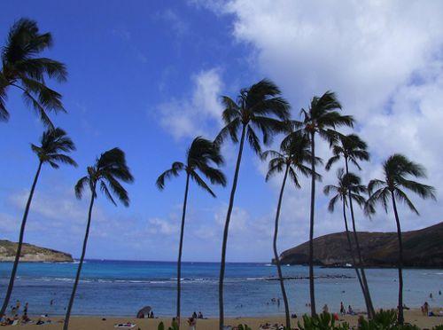 İşte Lost adası 10