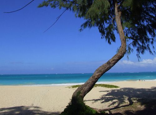 İşte Lost adası 11
