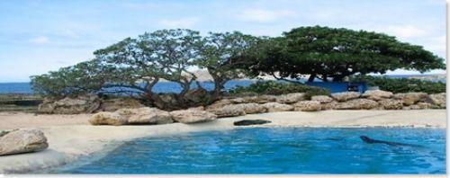 İşte Lost adası 18