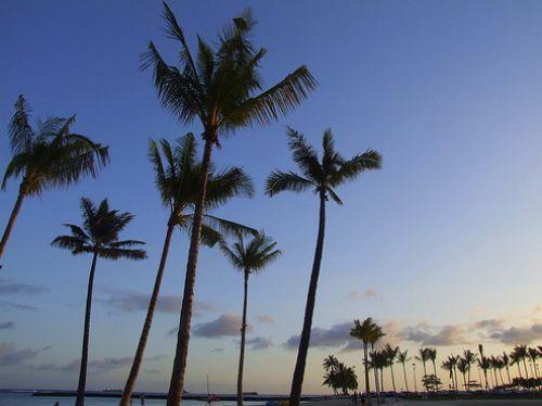 İşte Lost adası 8