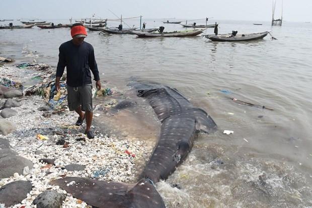 Köpek balıkları balıkçı ağlarına takıldı 1