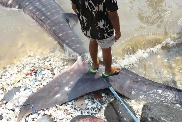 Köpek balıkları balıkçı ağlarına takıldı 2