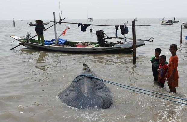 Köpek balıkları balıkçı ağlarına takıldı 3