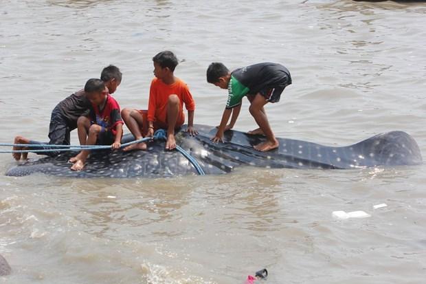 Köpek balıkları balıkçı ağlarına takıldı 9