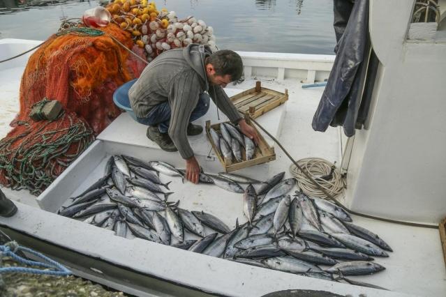 Palamutlar göç yolunda, balıkçılar tetikte 1