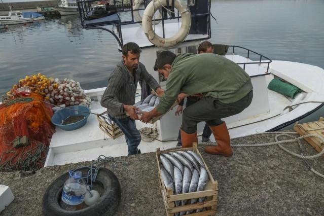 Palamutlar göç yolunda, balıkçılar tetikte 3