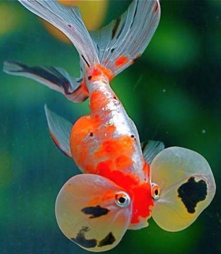 Bu nasıl balık? 1