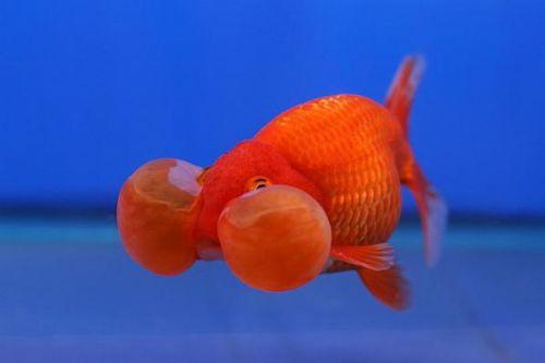 Bu nasıl balık? 13