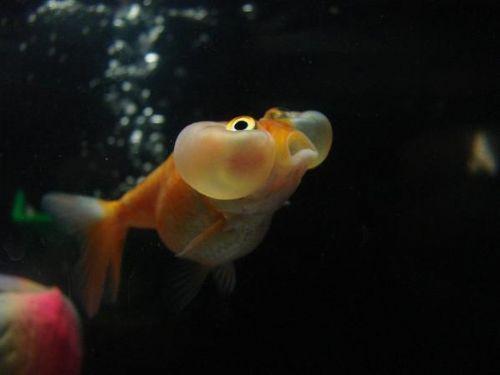 Bu nasıl balık? 14