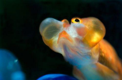 Bu nasıl balık? 2