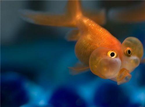 Bu nasıl balık? 4