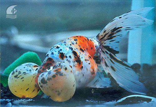 Bu nasıl balık? 6