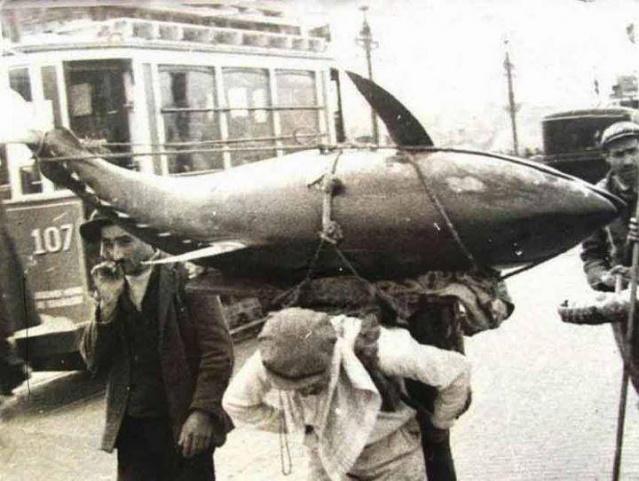 Balık dolu siyah beyaz İstanbul 30