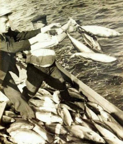 Balık dolu siyah beyaz İstanbul 44